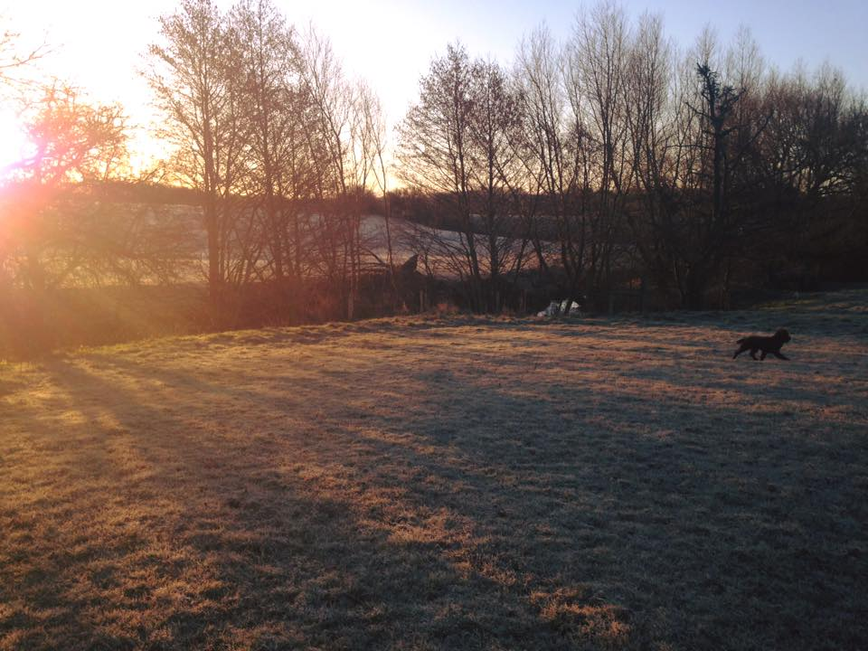 Frosty morning at Proper Dog Day Care