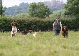 Bouncing Bella on a walk with Proper Dog Day Care, near Belvoir Castle