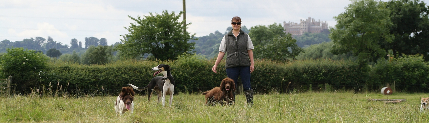 Walking on the farm in the Vale of Belvoir, with Proper Dog Day Care
